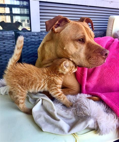 Tiny Rescue Kitten Makes Her Canine Friend Her New Papa