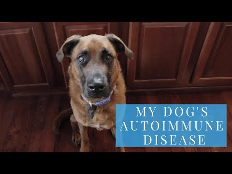 How to Treat Lupus in Dogs