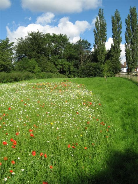 Orchard and Wildflower Meadow | Jardin Design